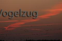 500 Vogelzug 9857 hd