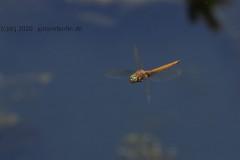 a4801-Libelle-4k