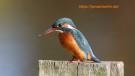 Ornithologie Ostsee